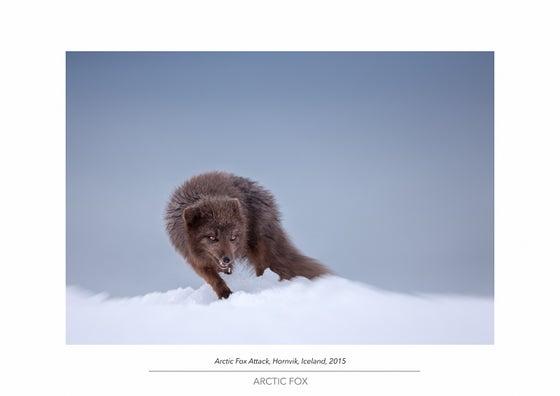Image of Arctic Fox Portfolio