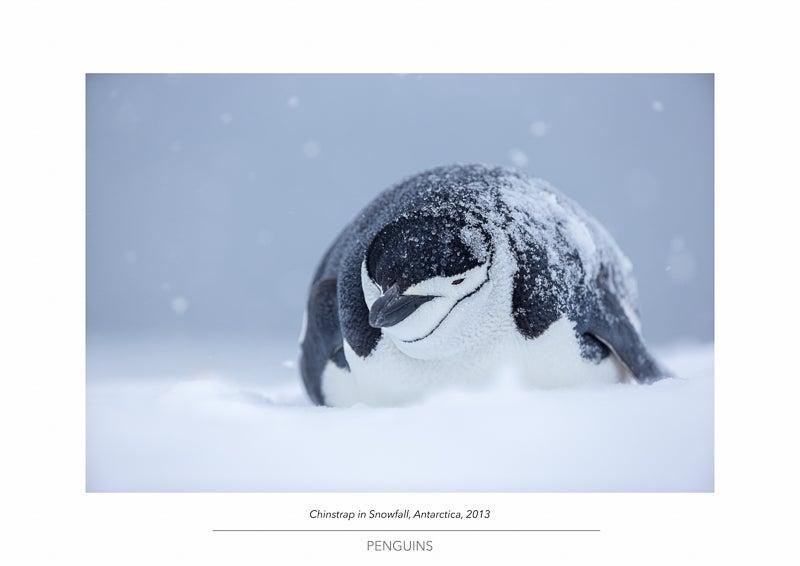 Image of Penguin Portfolio