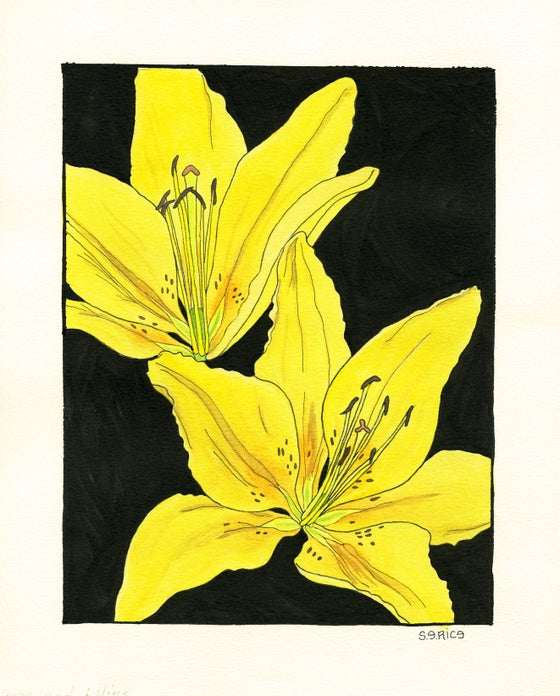 Image of Lily-Lilium