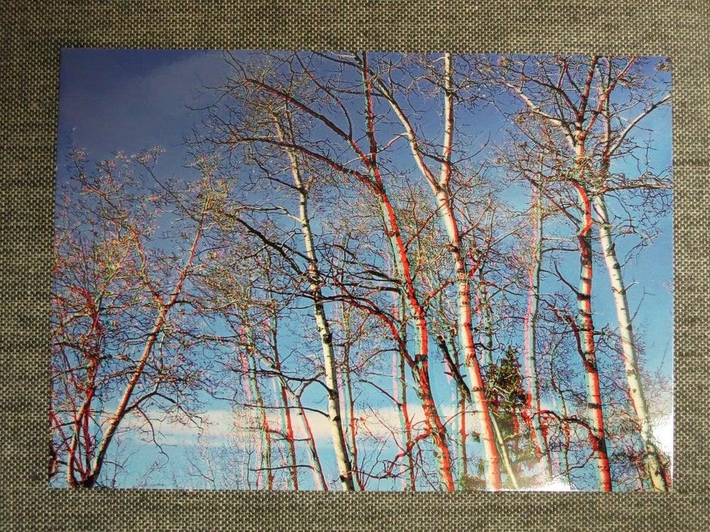 Image of 3d postcard - poplar
