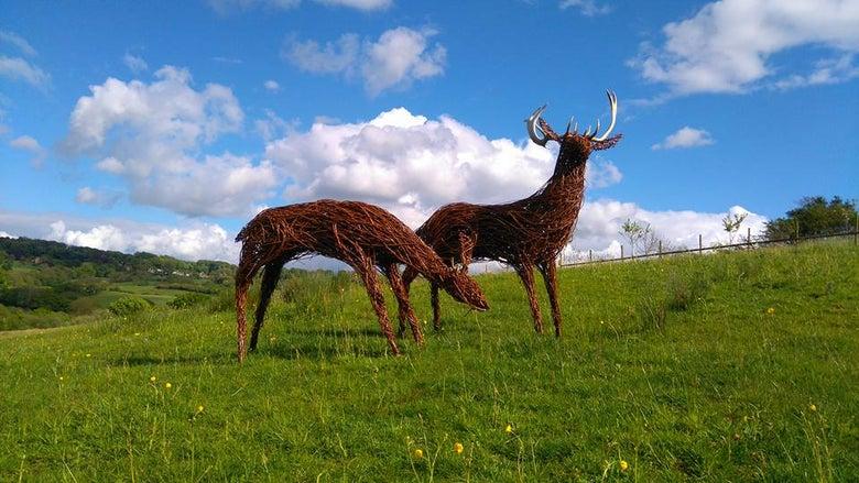 Image of Deer