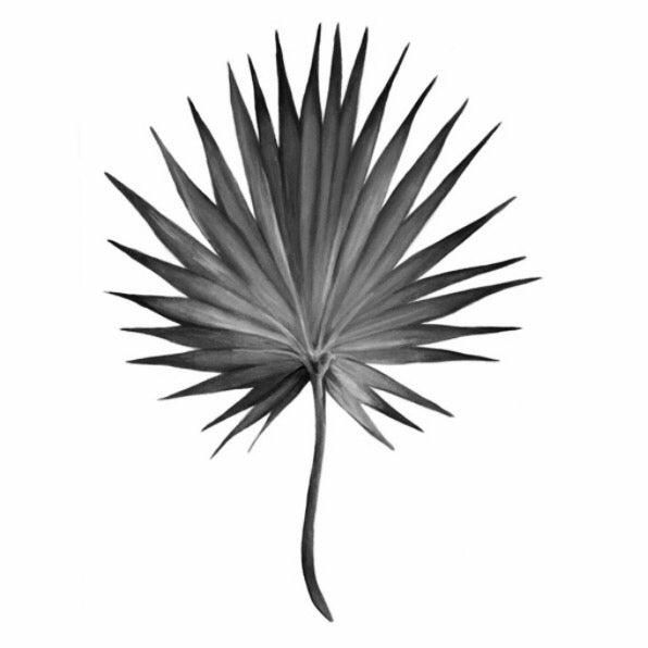 Image of Fan Palm B&W