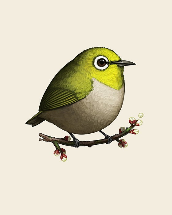 Image of Japanese White-eye