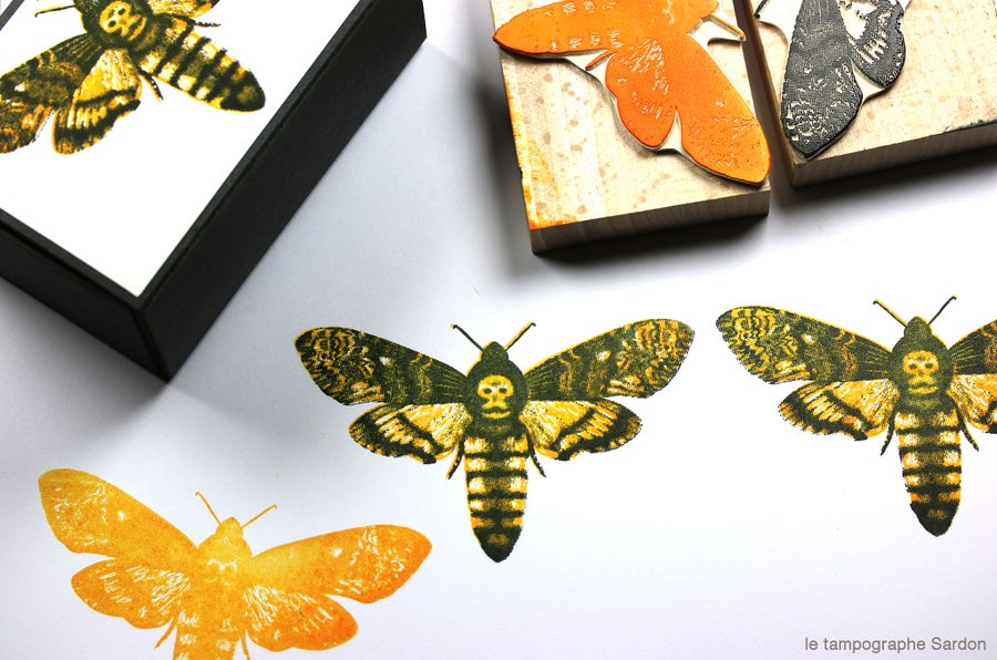 Image of Sphinx - Death's-head hawkmoth