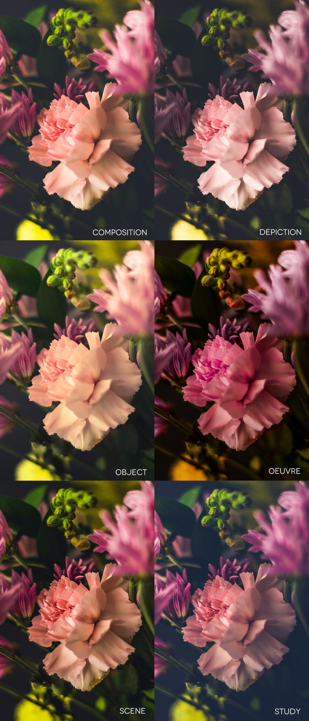 Image of The Untitled Collection | Lightroom Presets for still life photography