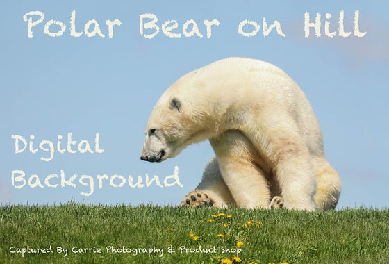 Image of Polar Bear on Hill Digital Background