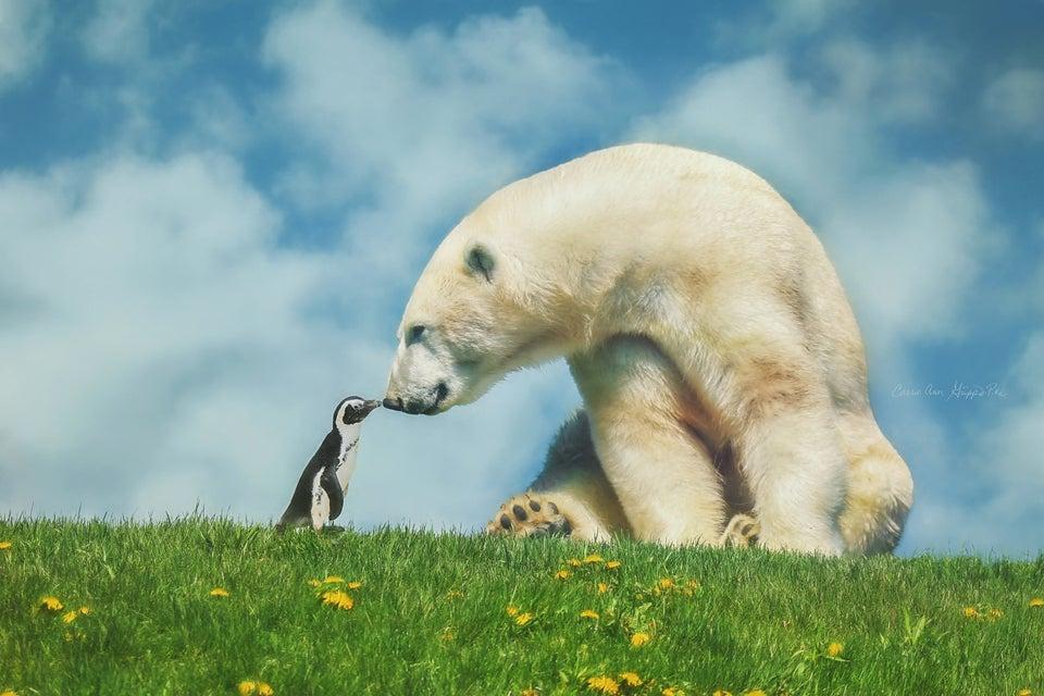 Image of Polar Bear on Hill Digital Background