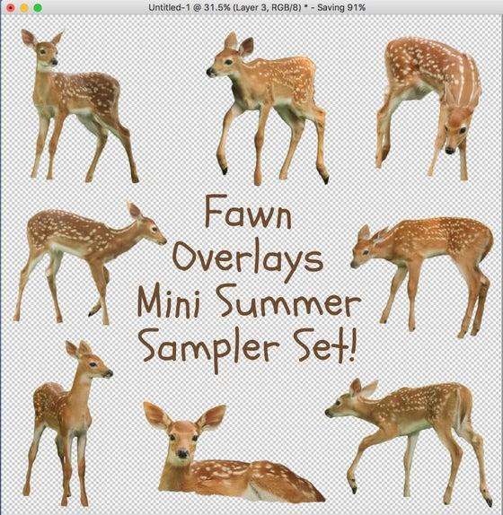 Image of Fawn Overlays Mini Summer Sampler Set