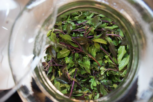 Image of HOLY BASIL spagyric tincture - alchemically enhanced plant extraction