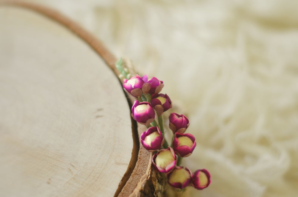 Image of Blossom ( lilac)
