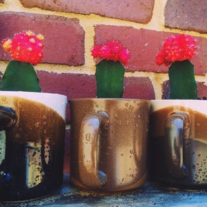 Image of The Vintage Mug Planters |NOTS|