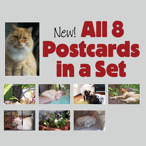 Image of Set of 8 Giant Postcards, FREE Shipping
