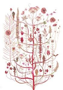 Image of Pink Flora / Skär Flora
