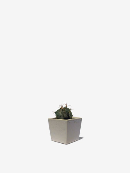 Image of Ceramic Planter