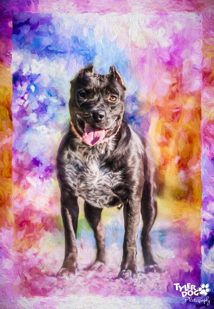 Image of Gracie's Rainbow Print
