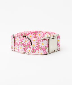 Image of Painted Daisies Dog Collar in the category  on Uncommon Paws.