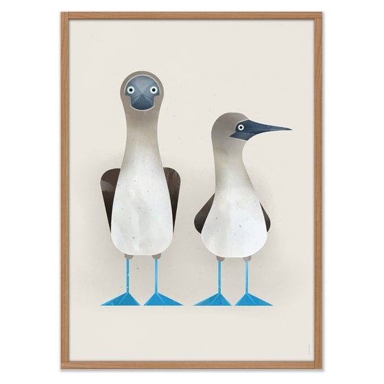 Image of Blue-footed Boobies