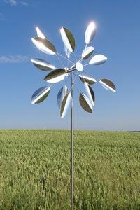 Image of Sun Flower