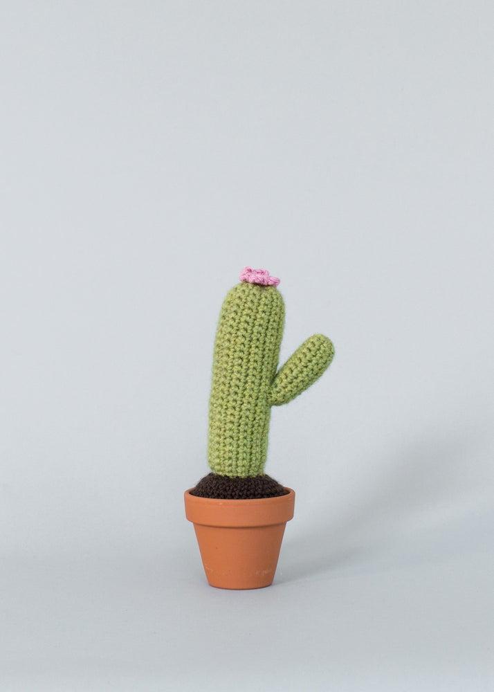 Image of 1 arm cactus