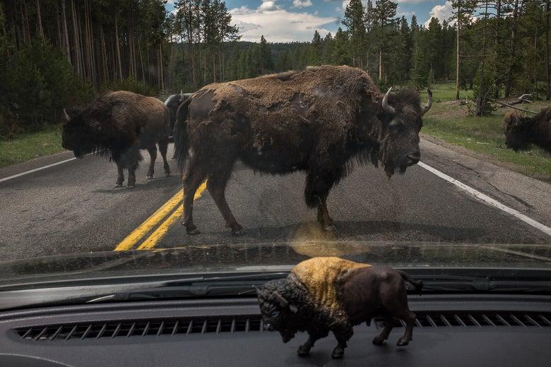 Image of Yellowstone I