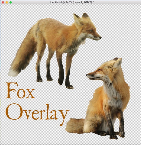 Image of Two Fox Overlay