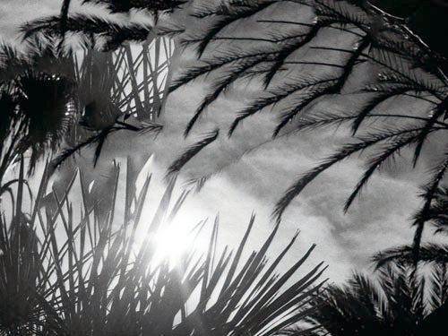 Image of Dark Palms