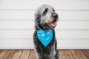 Image of Summer Market Bandana