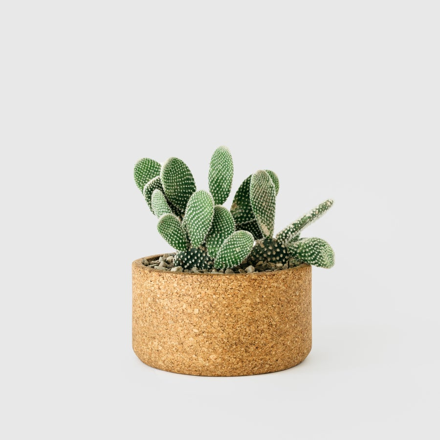 Image of Low Cork Planter 7.5""