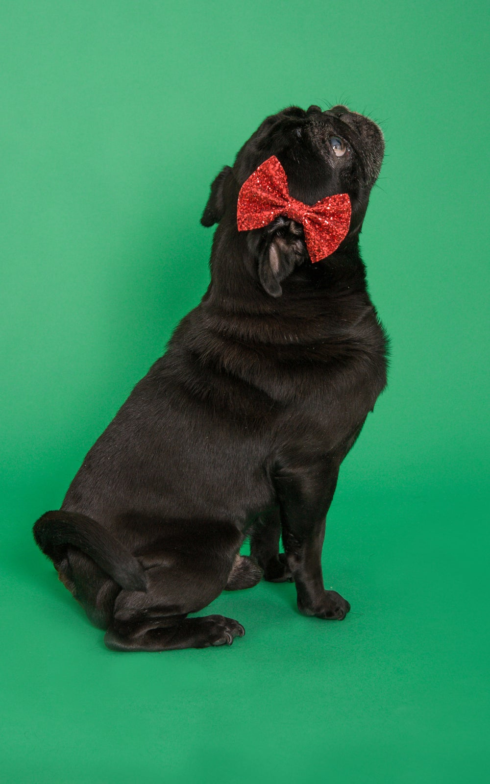 Image of Doggy Dicky Bow Tie Available in 30 Colours