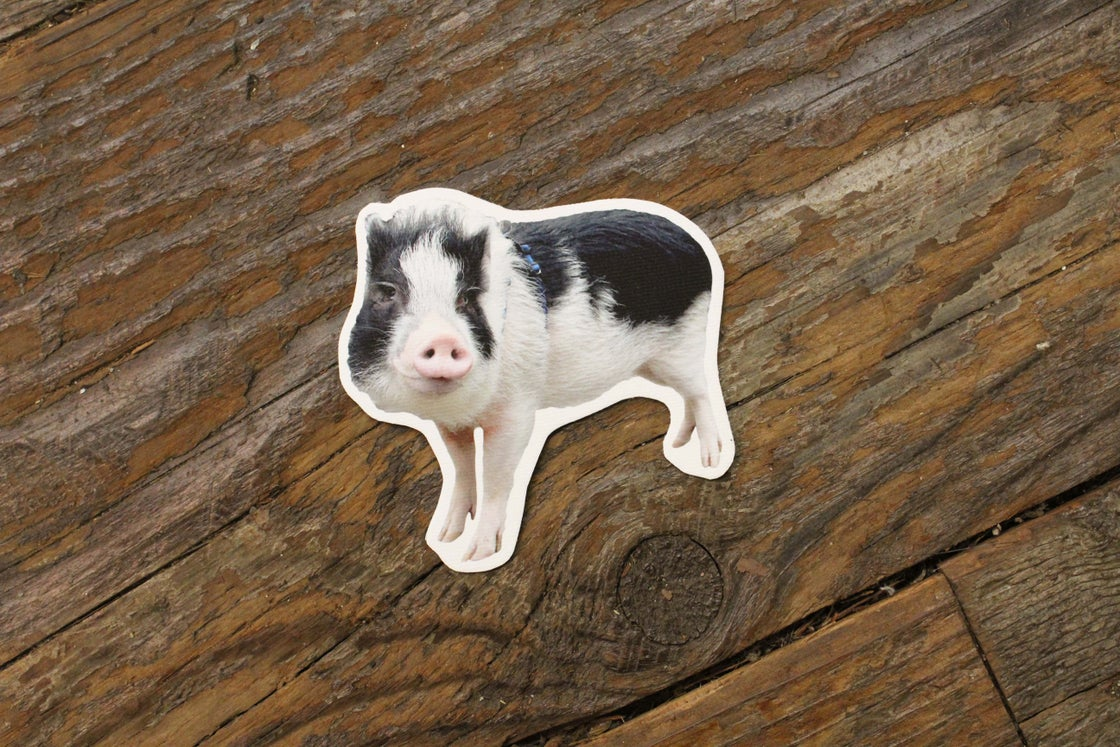 Image of FRANKLIN THE PIG MAGNET