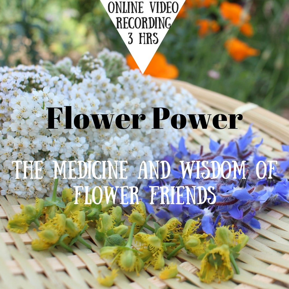 Image of Online Video: Flower Power- the medicine and wisdom of flower friends