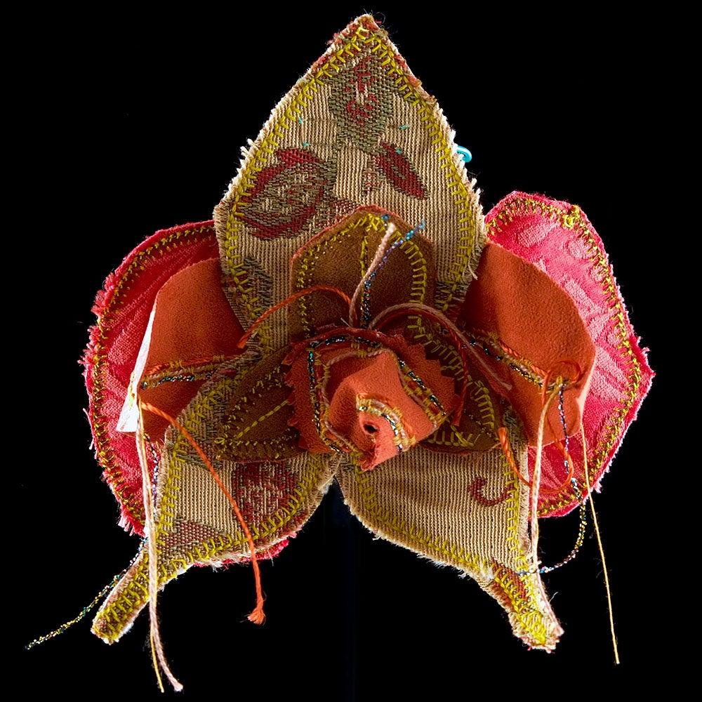 Image of Appendiculata