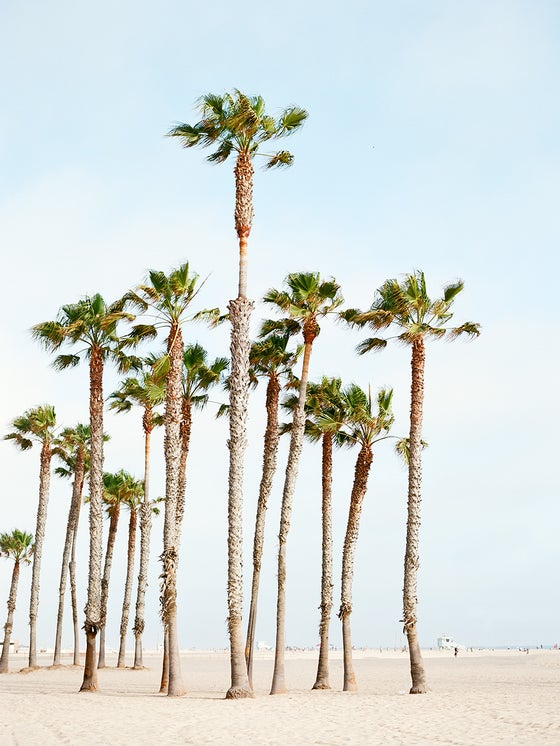 Image of Santa monica palms