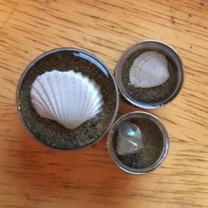 """Image of Seashell plugs (sizes 2g-2"""")"""
