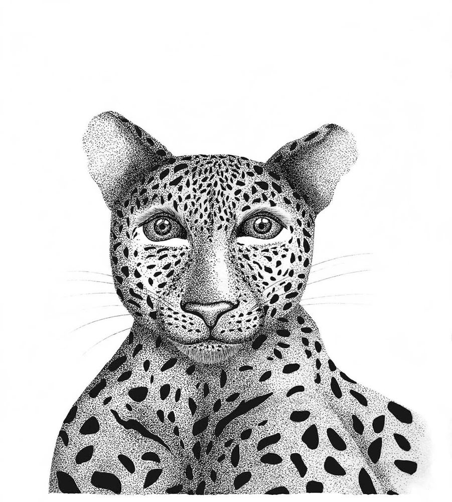 Image of Leopard