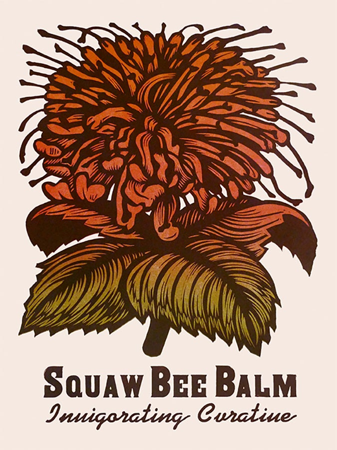 Image of Squaw Bee Balm
