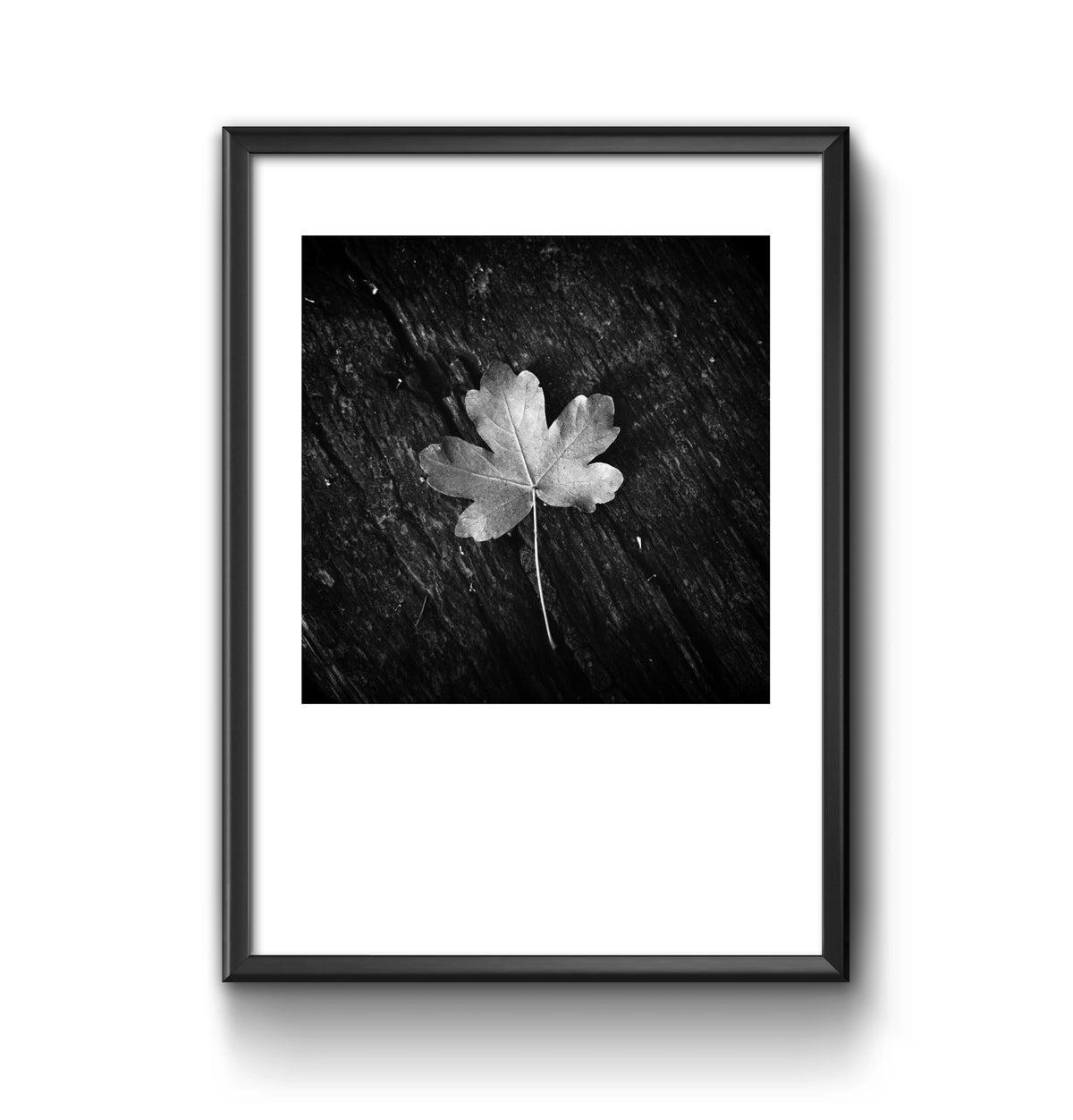 Image of Leaf - Gege Gatt
