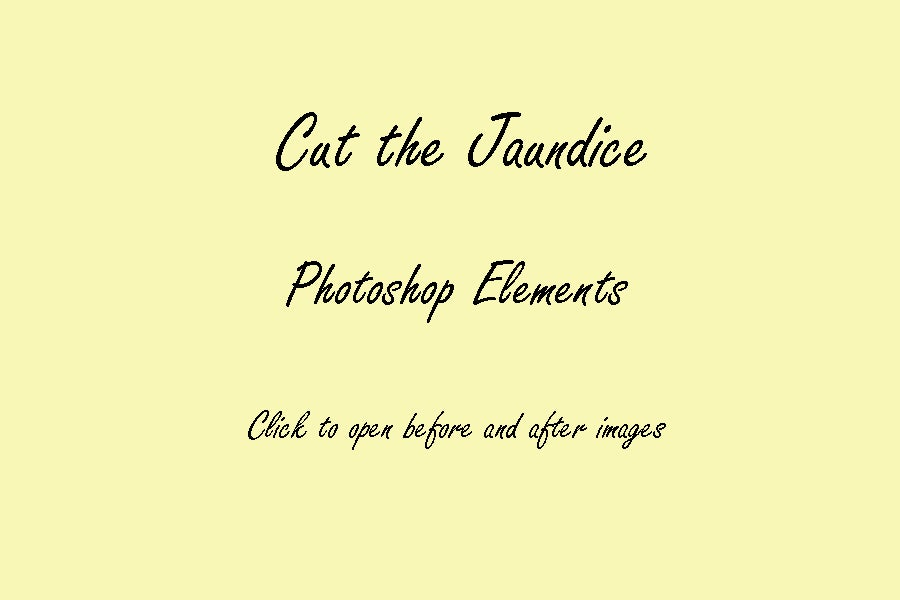 Image of PS Elements : Cut the Jaundice © Son Kissed Photography