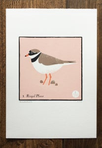 Image of Ringed Plover