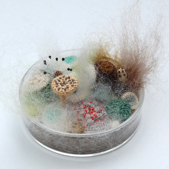 Image of Mouldy mayhem petri dish,  Limited edition No. 1/10