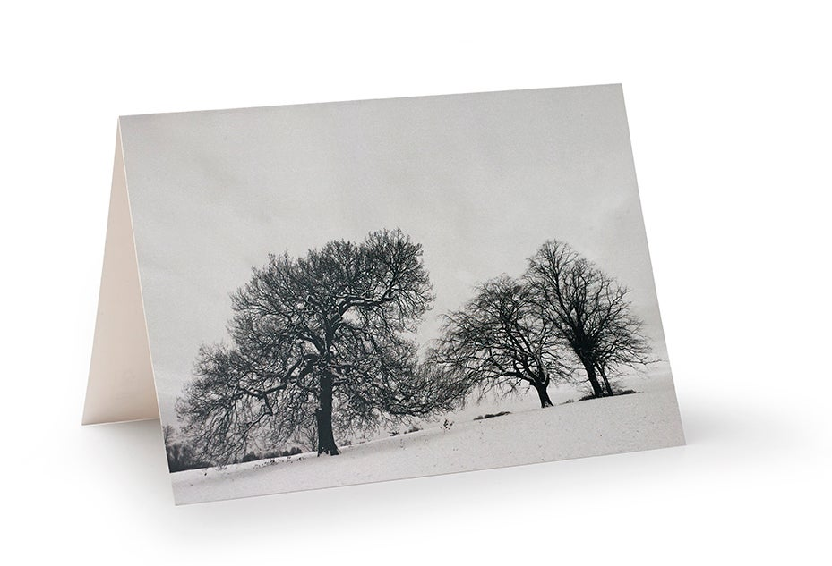 Image of Winter oak and beech trees