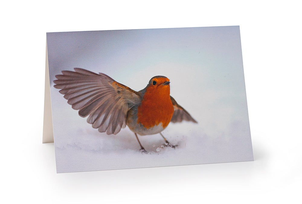 Image of European robin card