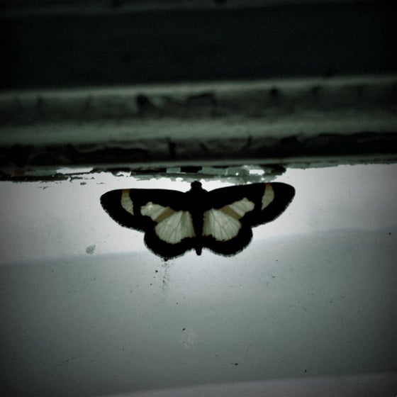 Image of Butterfly - photograph