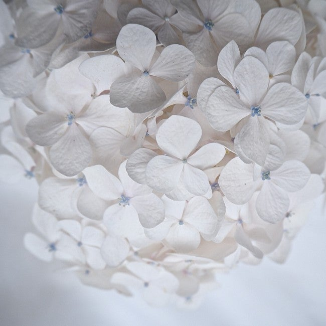 Image of open edition hydrangea print