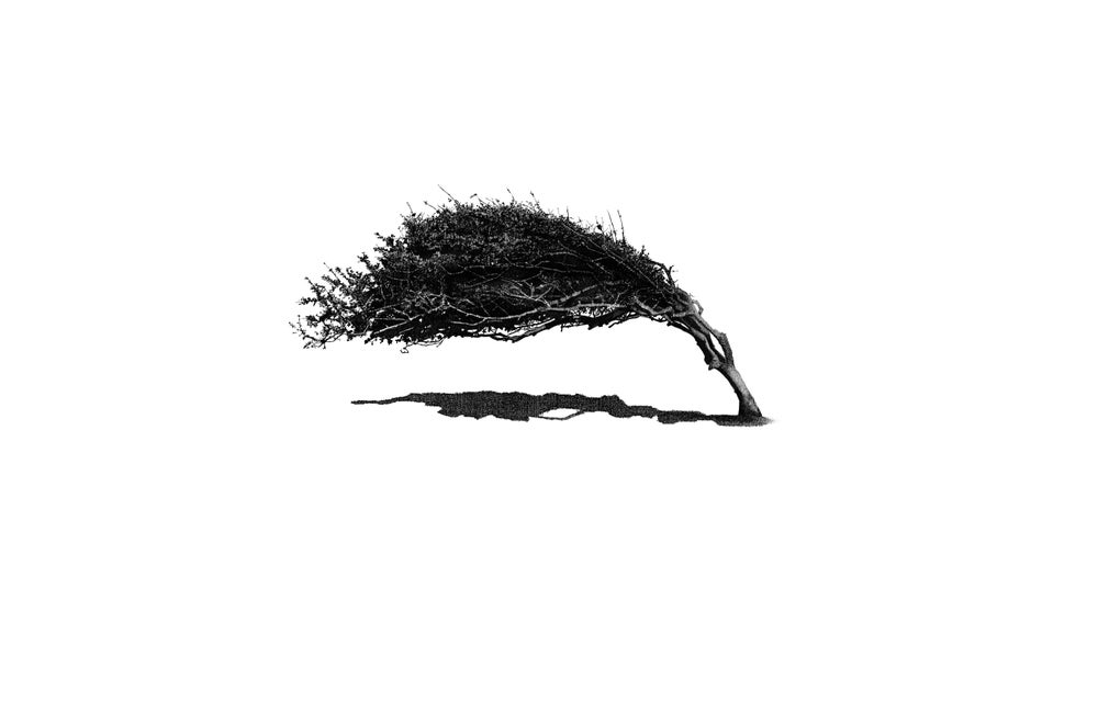 Image of Wind Formed Tree (Cuckmere Haven)