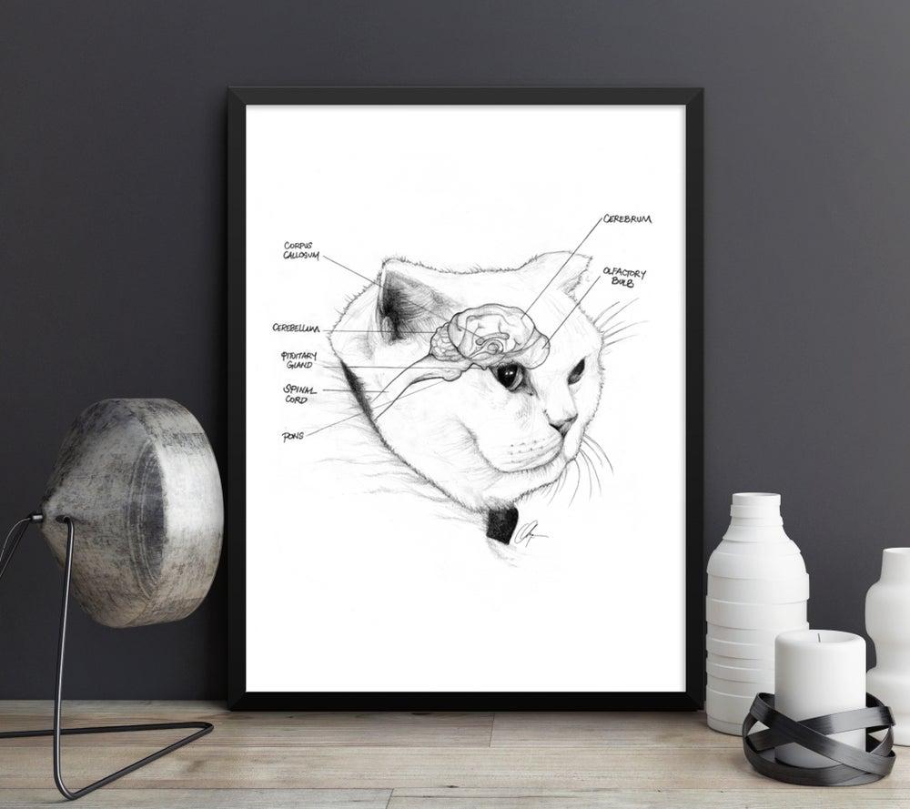 Image of Feline Neuroanatomy - Art Prints