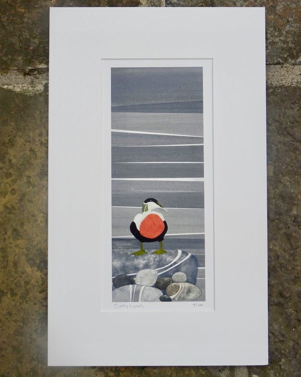 Image of Eider Duck Limited Edition Print