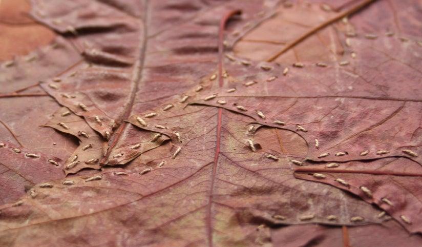 Image of Leaf Stitching: 6 postcard pack