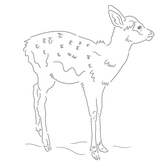 Image of Fawn screen print