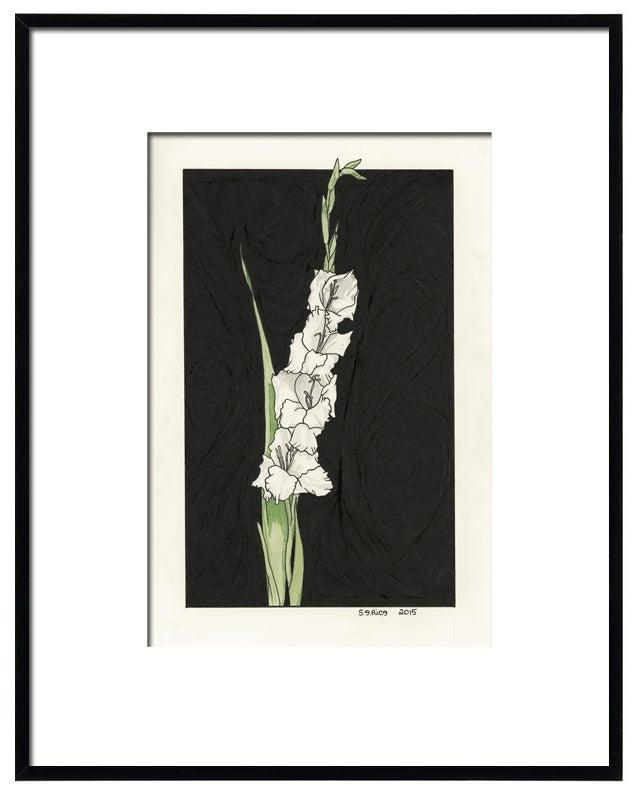 Image of Gladiolus